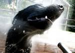 heat-stress-water