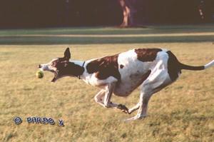 Greyhound0b