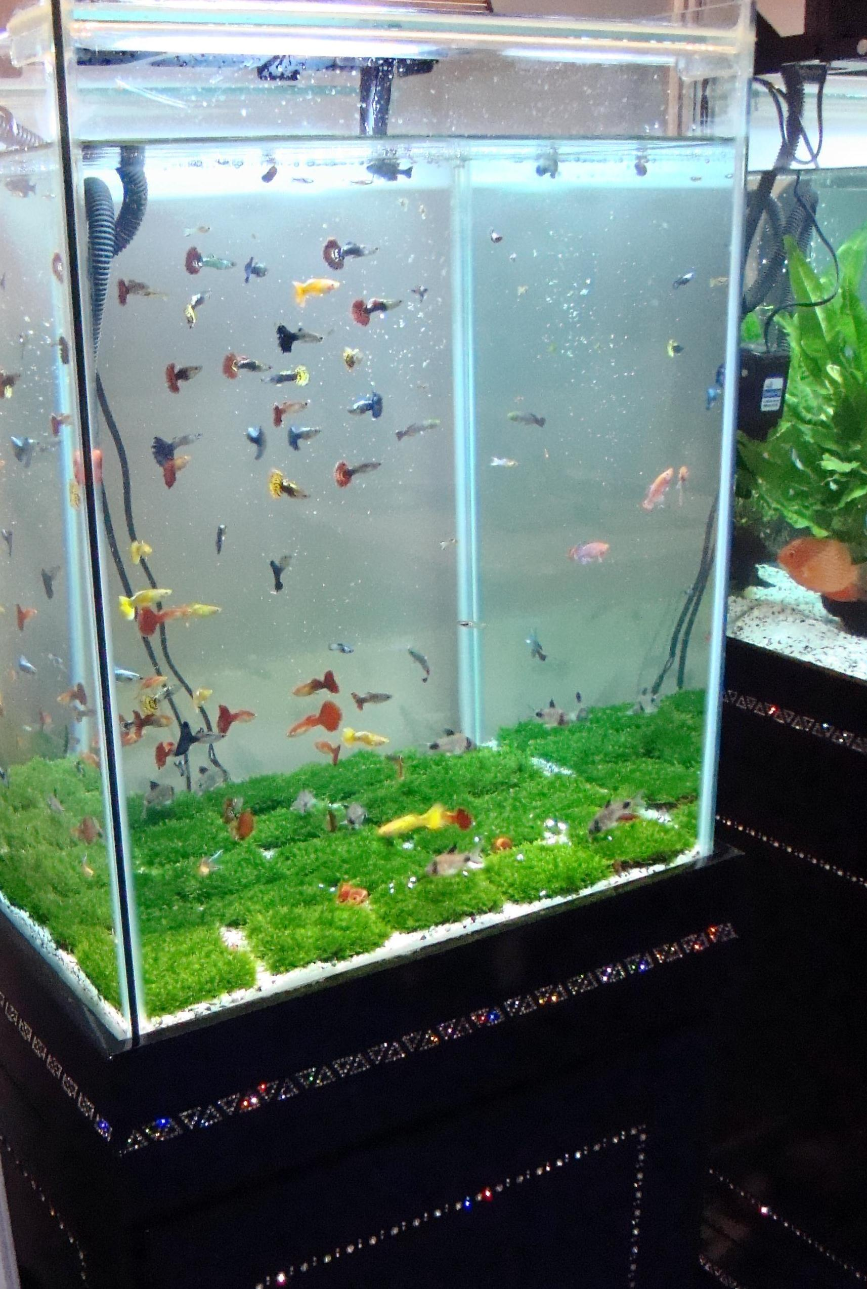 photo How to Start an Aquarium Shop