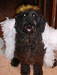 molly-angel