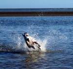 water-great-dane