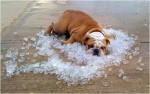 heatstres-ice
