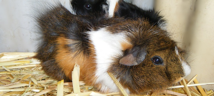 Pets Australia Pet Industry Business Membership Pet Owners
