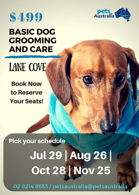 Basic Dog Grooming Course Schedules Pets Australia